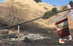 Image of fire damage in dry grassland