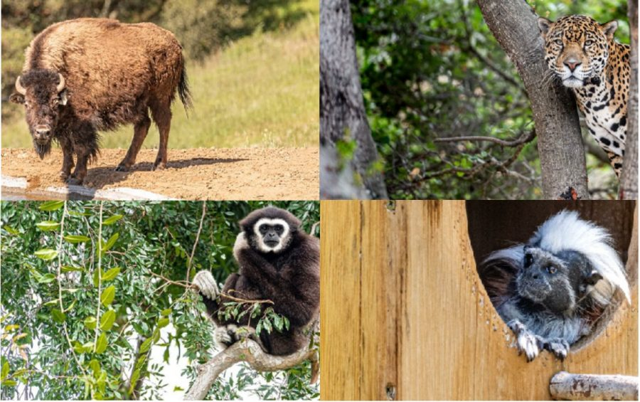 Four image collage of zoom animals
