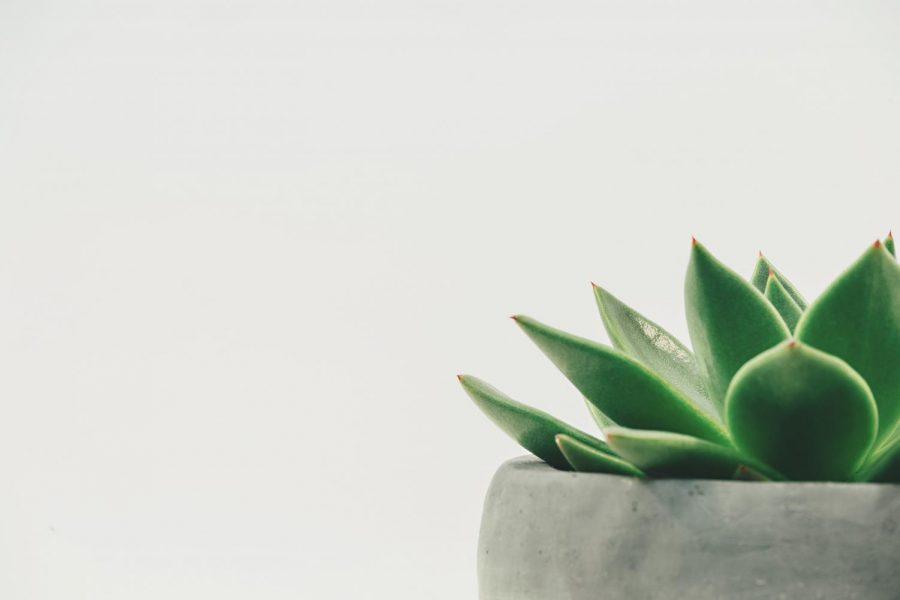 Live plant on desk
